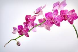 wt-gift-guide-orchid-copy
